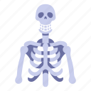 anatomy, body, bone, bones, human, skeleton, skull icon