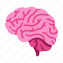 body, brain, idea, intelligence, internal, mind, organ icon