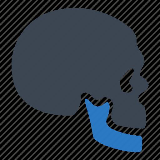 bone, skeleton, skull icon