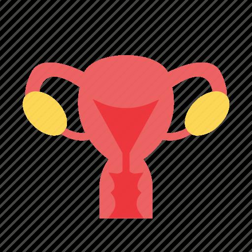 body, human, organ, uterus icon