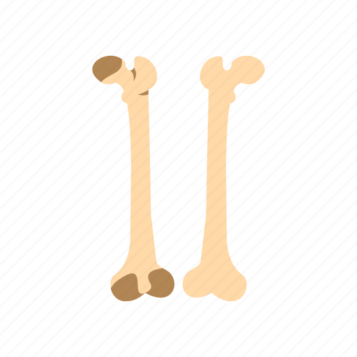 Anatomy, bone, fracture, healthy, identity, logo, strong icon - Download on Iconfinder