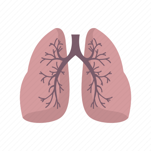 Chest, human, lung, lungs, pneumonia, system, vascular icon - Download on Iconfinder