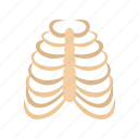 bone, cage, human, rib, rib cage, skeleton, thorax icon
