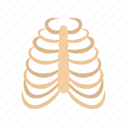 bone, cage, human, rib, rib cage, skeleton, thorax icon