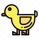 animal, duck, hunt, ornithology icon
