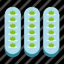 hydroponic, agriculture, gardening, indoor, farming, aeroponics