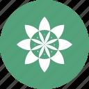 chart, diagram, flower, graph, pie chart, pie graph icon