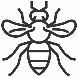animal, bee, bug, insect icon