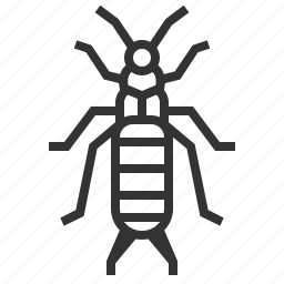 animal, bug, earwig, insect icon