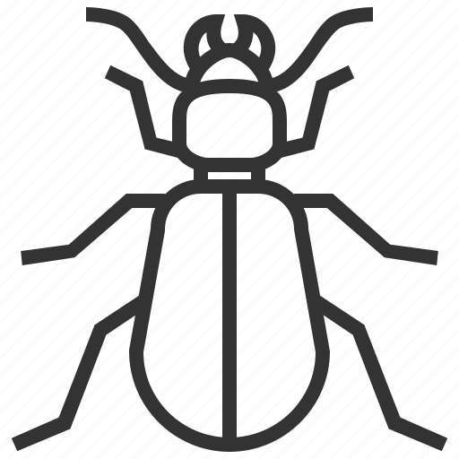 animal, beetle, ground, insect icon