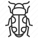 animal, beetle, insect, bug