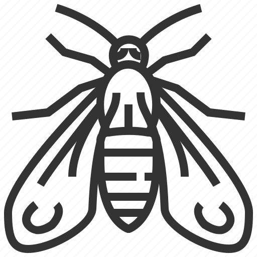 animal, bug, insect, moth, wasp icon