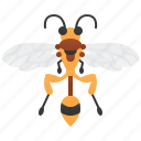 bee, hymenoptera, sting, striped, wasp icon