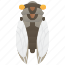 entomology, arthropods, forest, cicada, sound