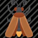 bug, nocturnal, bioluminescence, invertebrate, firefly icon