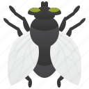 diptera, fly, house, insect, pest icon