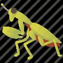 creature, invertebrate, leg, mantis, predator icon