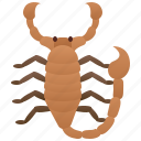 arachnid, dangerous, poison, predator, scorpion icon