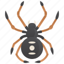 dangerous, poisonous, spider, widow icon