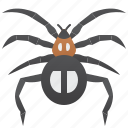 arachnid, invertebrate, pest, spider, web icon