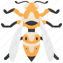 arthropod, dangerous, insect, sting, wasp icon