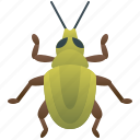beetle, coleoptera, entomology, insect, weevil