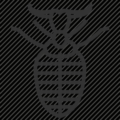 animal, antlion, bug, insect icon