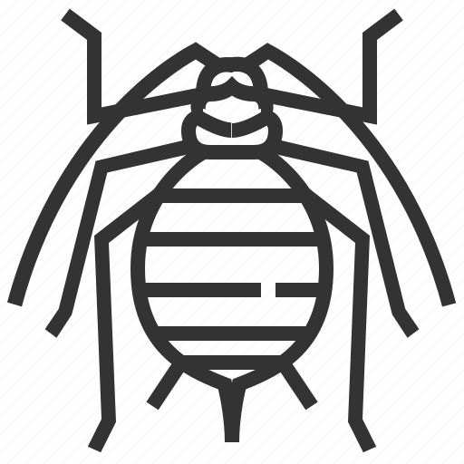 animal, aphid, bug, insect icon