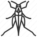 animal, bug, grasshopper, insect icon