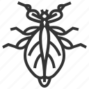 animal, bug, insect, leaf icon