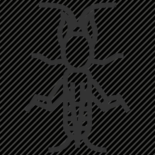 bug, cricket, insect, mole icon