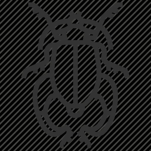 bug, buqueti, insect, sagra icon