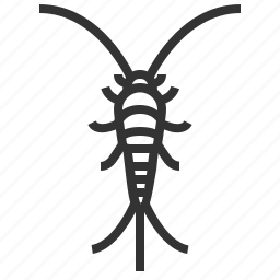 animal, bug, insect, silverfish icon