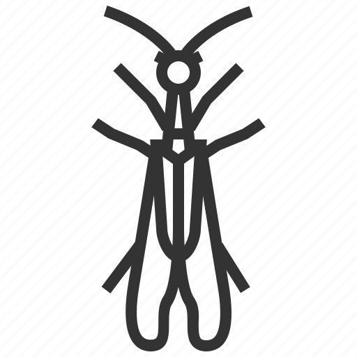 animal, bug, insect, snakefly icon