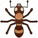 animal, ant, insect, pest, worker icon