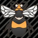 garden, pollinator, sting, entomology, bumblebee