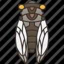arthropods, cicada, entomology, forest, sound