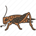 bugs, chirping, cricket, gryllidae, insect icon