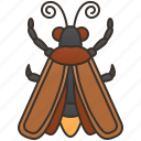 bioluminescence, bug, nocturnal, invertebrate, firefly icon