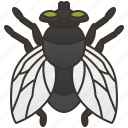 pest, insect, diptera, house, fly icon