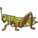 arthropod, field, grasshopper, insect, pest icon