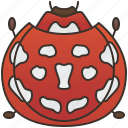 beetle, bug, insect, ladybug, nature icon