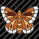 fauna, lycaenidae, butterfly, flower, pollinator