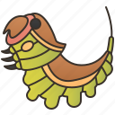 moth, invertebrate, puss, vinula, cerura