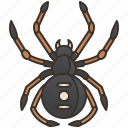 spider, poisonous, widow, dangerous