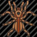 spider, dangerous, scary, tarantula, venomous