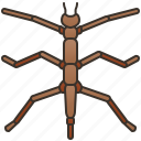 bug, insect, pest, thrips, thysanoptera icon