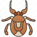 bug, giant, insect, pond, water