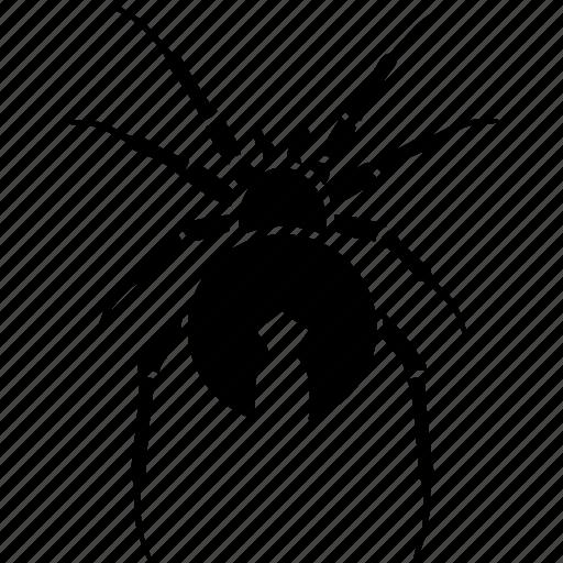 australian, dangerous, deadly, red stripe, redback, spider, venomous icon