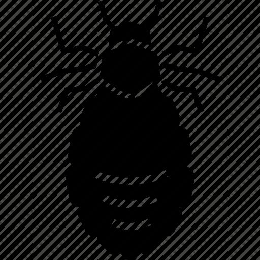 Flea, head lice, lice, mite, parasite icon - Download on Iconfinder